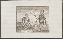 Salmon - Man Ape from Angola and Chimpanzee