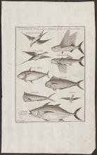 Salmon - Flying Fish, Frigate Bird, Dolphin, Albatross, Fish