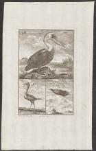 Salmon - Pelican, Egret, Bird of Paradise