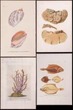 Lot of 10 Sea Life Engraving & Lithographs