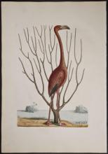 Fine Art - Antique Engravings & Lithographs - Works on Paper