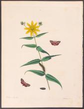 Abbot - Common American Tiger Moth. 64