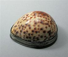 Banff (probably) - a Cowrie shell snuff box 8cm long
