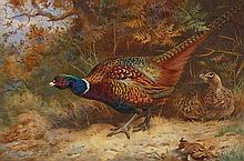 ARCHIBALD THORBURN (SCOTTISH 1860-1935) COCK AND HEN PHEASANT IN UNDERGROWTH 37cm x 56cm (14.5in x 22in)