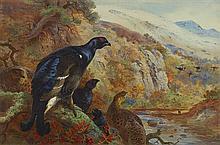 ARCHIBALD THORBURN (SCOTTISH 1860-1935) IN THE GLEN, BLACKCOCK 37cm x 56cm (14.5in x 22in)