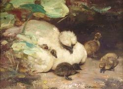 WILLIAM WALLS R.S.A., R.S.W (1860-1942) SILKIE AND DUCKLINGS 30cm x 41cm (12in x 16in)