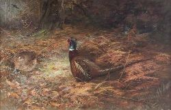 CHARLES WHYMPER (1853-1941) PHEASANTS IN UNDERGROWTH 40cm x 60cm (16in x 23.5cm)