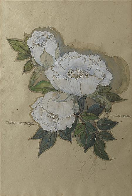 MARY NEWBERY STURROCK (1892 -1985) 'TREE PEONY' 52 x 35cm