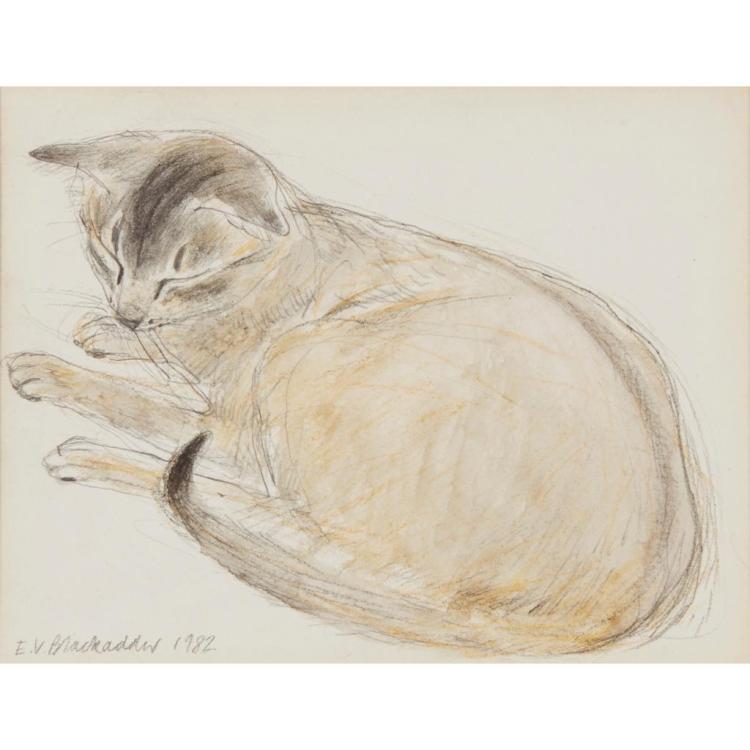 [§] ELIZABETH BLACKADDER D.B.E., R.A., R.S.A., R.S.W., R.G.I. (SCOTTISH B.1931) CAT STUDY 13.5cm x 17.5cm (5.25in x 7in)