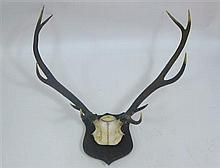 GROUP OF MOUNTED ANTLERS AND TAXIDERMY 19TH / EARLY 20TH CENTURY