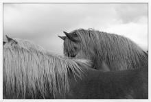 Nick Turner, Untitled (Horse Eye), Iceland