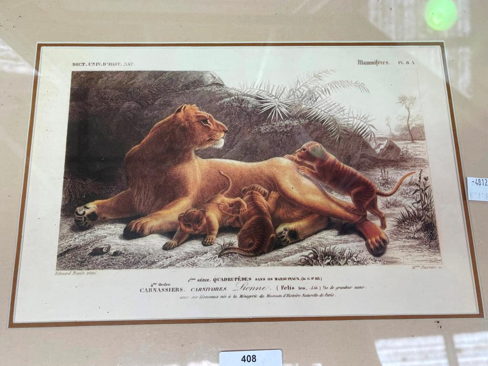 African animals coloured prints, after the antique, each approx 19cm x 29cm (5)