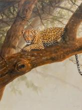 """Grant Hacking (b. 1964), Leopard, Oil on Canvas, 40 x 30"""""""