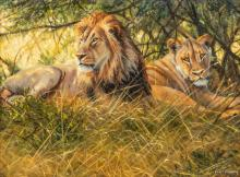 """Grant Hacking (b. 1964), Lions, Oil on Canvas 12 x 16"""""""