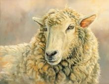 """Grant Hacking (b. 1964), Sheep, Oil on Canvas 14 x 11"""""""