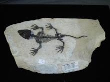 Fossil Reptile