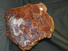 Petrified Wood Round