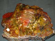 Petrified Wood Section