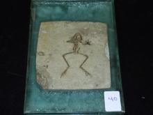 Fossil Frog - Rana Basaltica