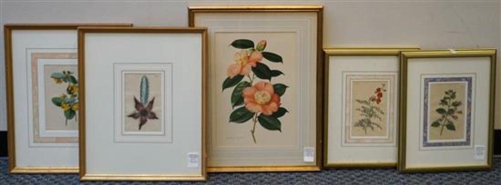 Five Botanical Color Prints, Largest Frame: 23-3/4 x 18 in
