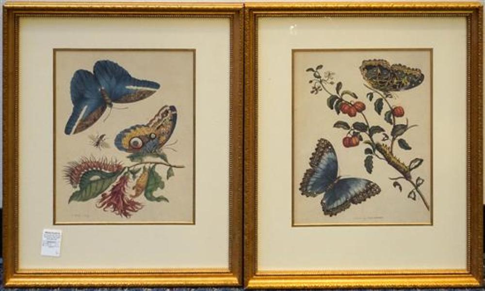 Butterflies and Insects, Two Framed Prints, Frame: 21-1/2 x 17-1/2 in