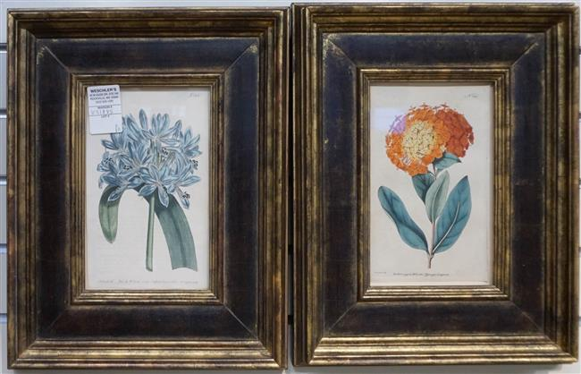 Pair Botanical Engravings; framed at 15 x 12 Inches