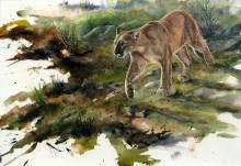 John Stone - Cougar