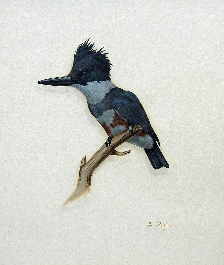 Luke Raffin Kingfisher