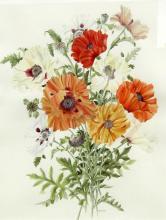 Caren Heine Poppies