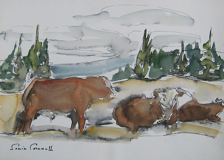 Cornwall Canadian oil cattle resting
