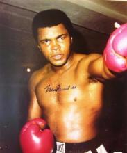 memorabilia Muhammad Ali Autographed 8x10 Color