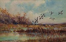 Watercolor, waterfowl, Frank V. Smith