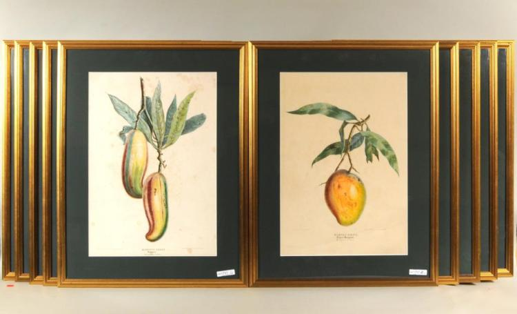 Group Ten French Framed Hand Colored Lithographs