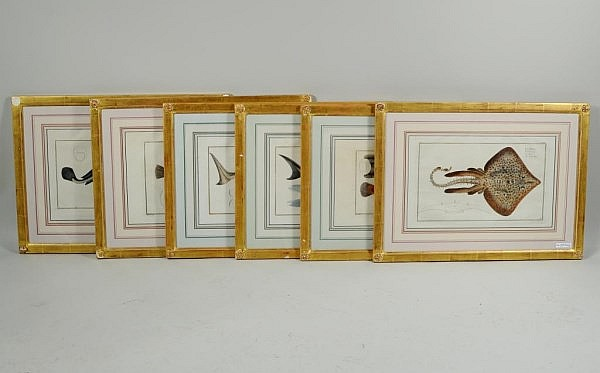 Six Framed Colored Engravings, Fish