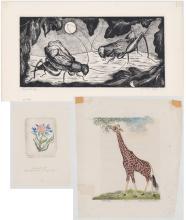 Alice Pauline Schafer Linocuts/Etching [Nature]