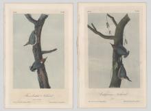 J.T. Bowen Audubon Prints, Two